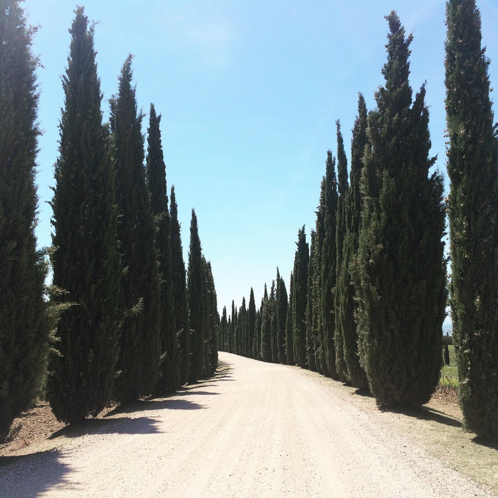 Blissful Yoga Retreat in Tuscany - cypress trees