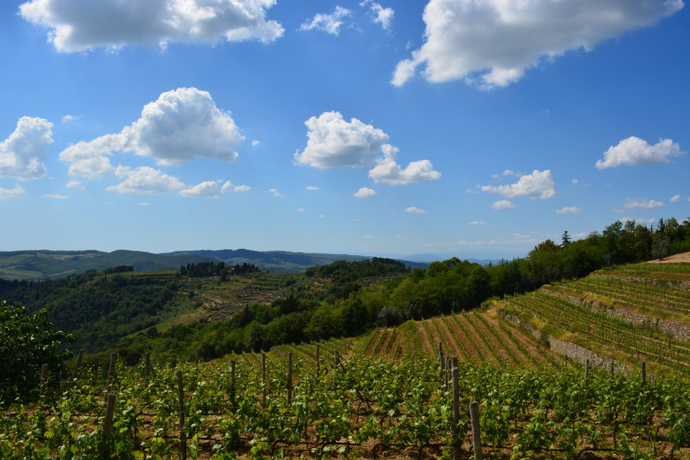 Tuscany Yoga Retreat - Tuscan Vineyards - La Dolce Vigna  Wine Tours