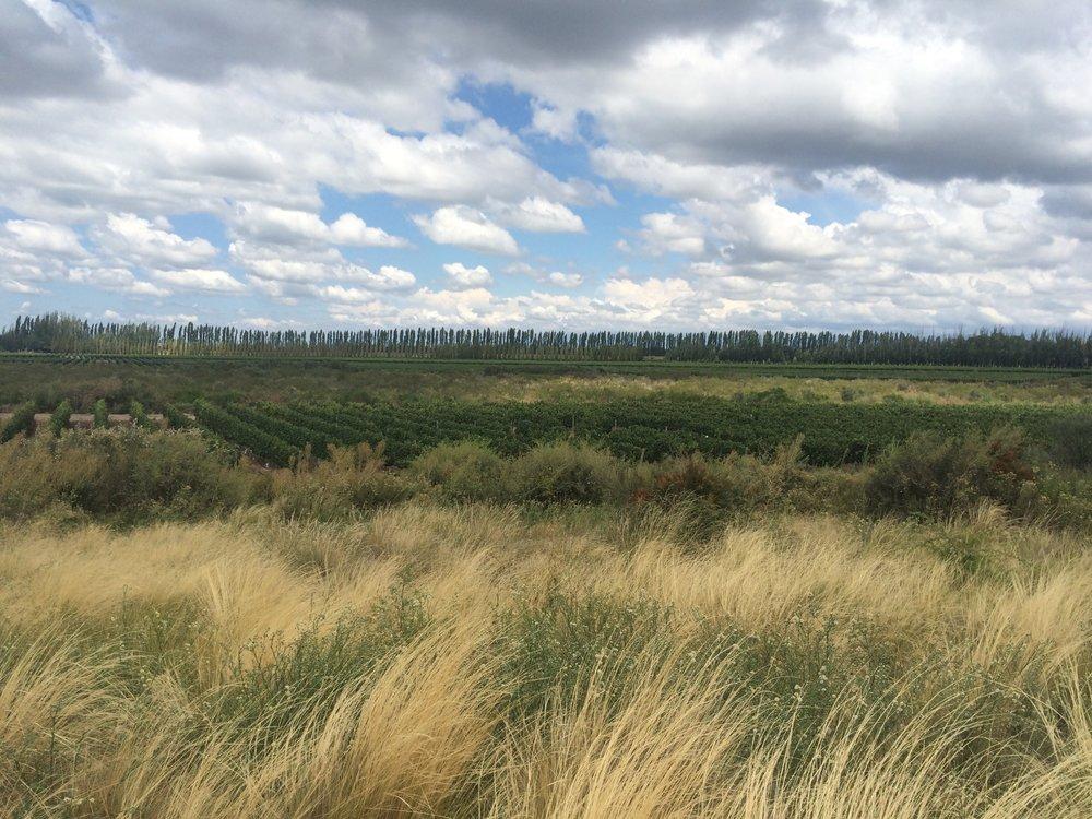 Mendoza-Wine-Tour_Mendoza Landscape_La Dolce Vigna_.jpg