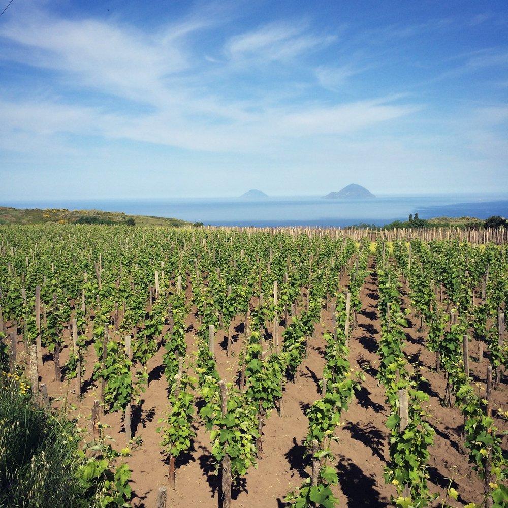 La-Dolce-Vigna_Sicily-Wine-Tour_8.jpg