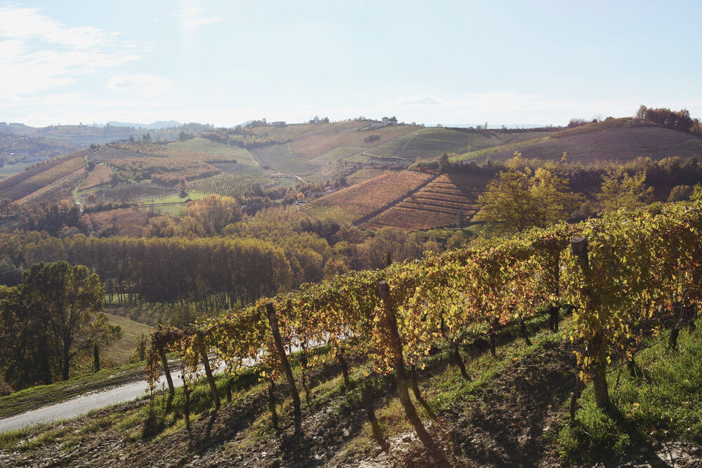 Copy of Best Piemonte Wine Tour - Piemonte Vineyards