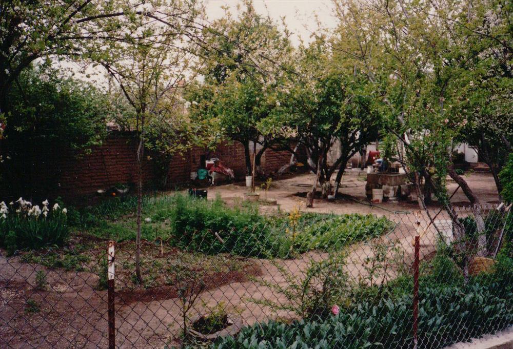 Dooryard garden, Cucurpe, Sonora, Mexico