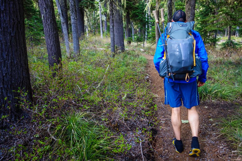 oregon forest trekking