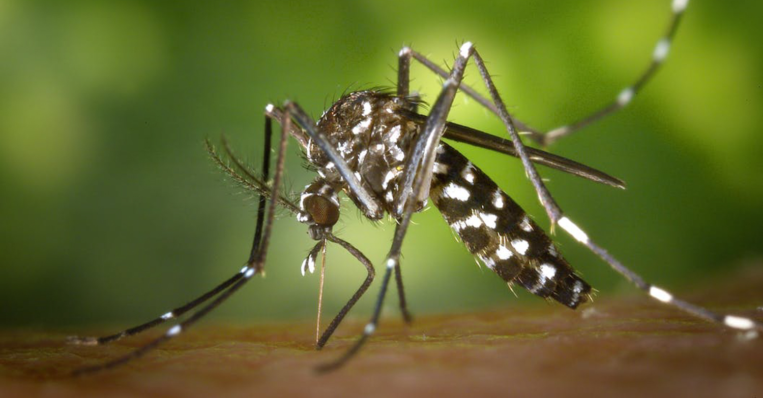 Vanillin from mosquitoes, or How to protect yourself from annoying insects