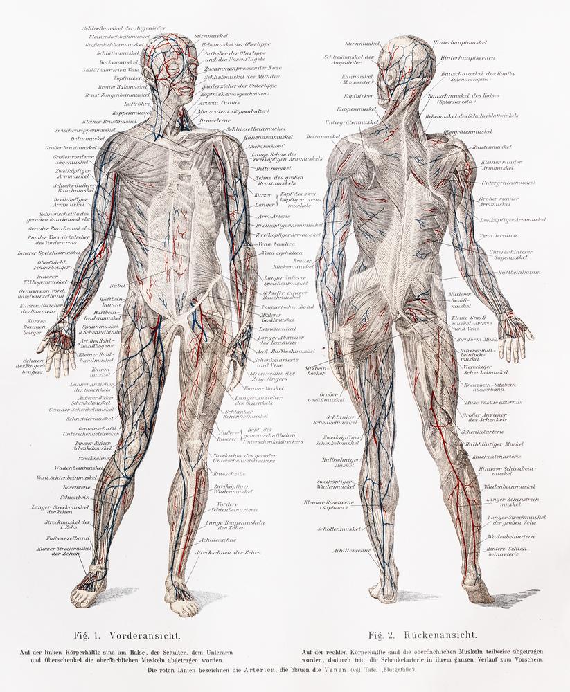 fisiologia holistica