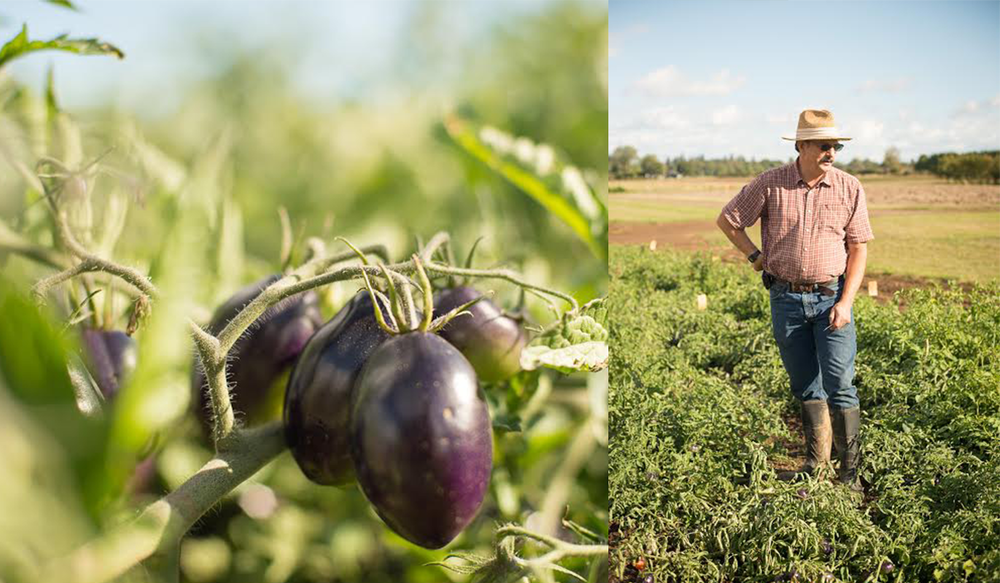 Breeder Jim Myers and his tomatoes :: Photos courtesy of Shawn Linehan