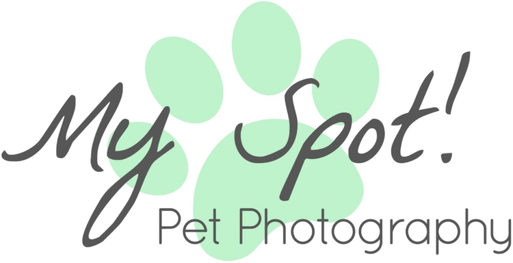 My Spot! Pet Photography