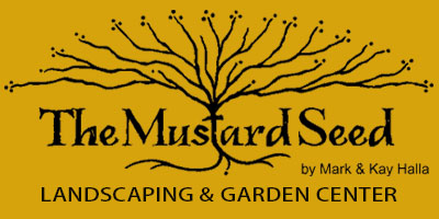 bb699725d19057 Bees — The Mustard Seed