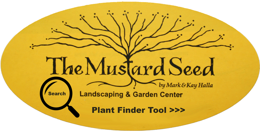 the mustard seed Welcome, join us for dinner the mustard seed bistro is a european style cafe, all centered on hand carved sandwiches, fresh daily products and unforgettable flavors.