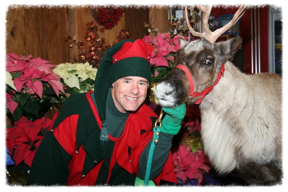 Elf_Reindeer.jpg
