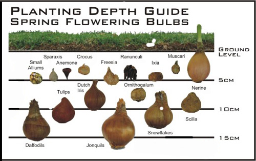 x-bulb-planting-depth-guide.jpg