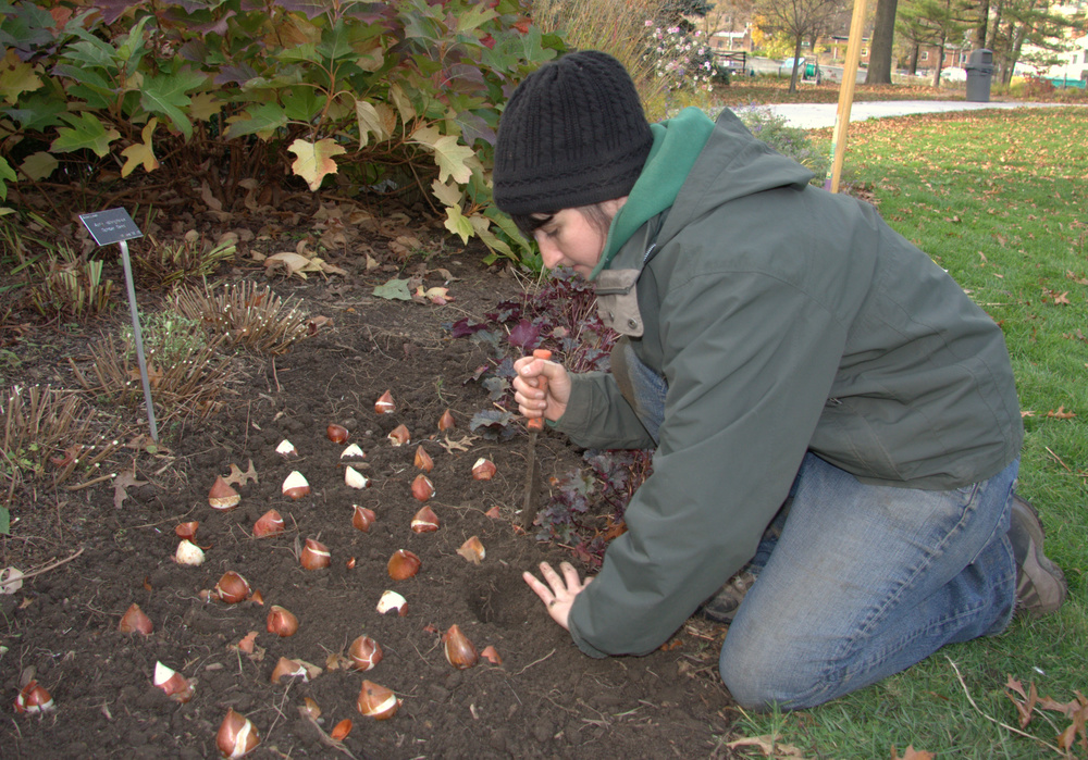 bulb planting.jpg