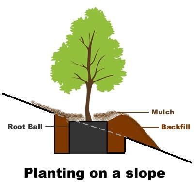 PlantingOnASlope.jpg