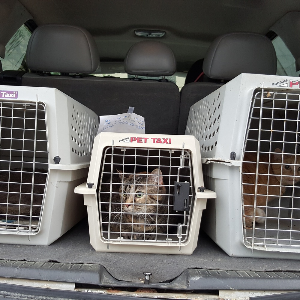 Cat transport to APA in St Louis in 2016