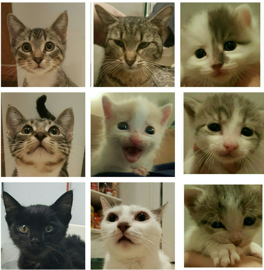 "This is the ""FABULOUS 9"". These nine cats and kittens were all rescued and fostered by us during the      summer of 2016."