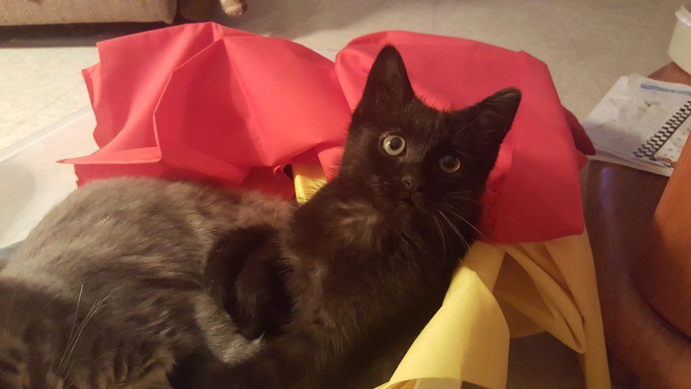 Freddie (Catsup)