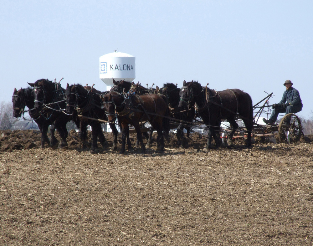amish plowing.jpg