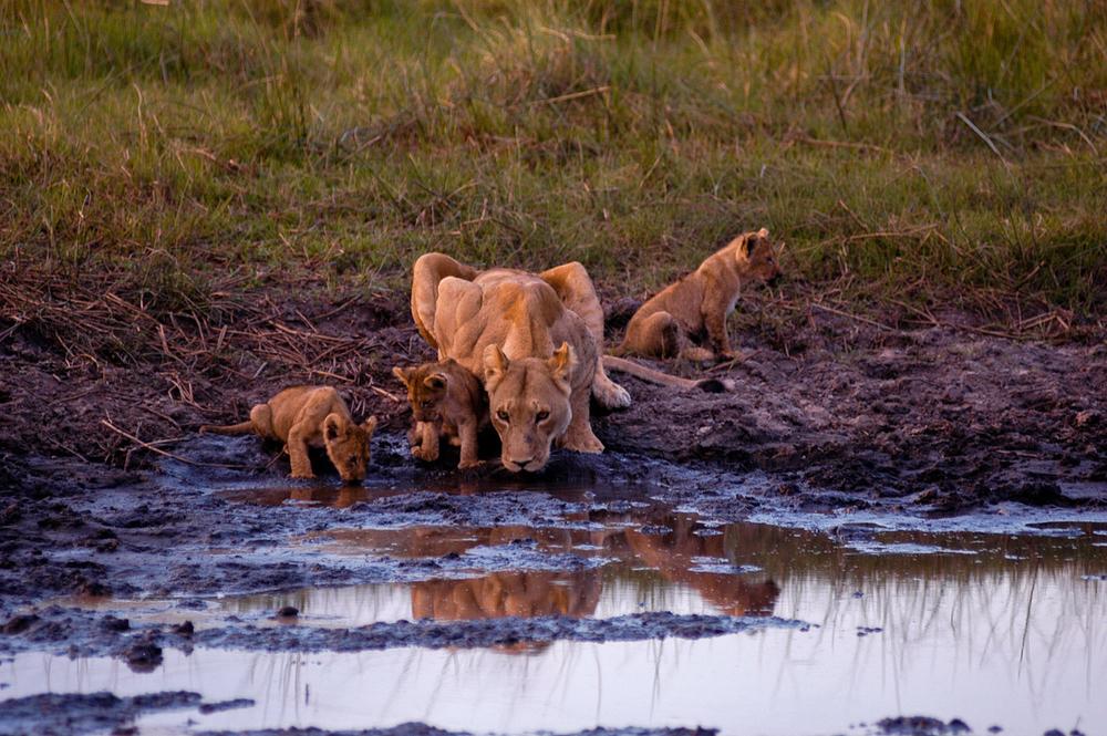 Animals from Botswana-3.jpg