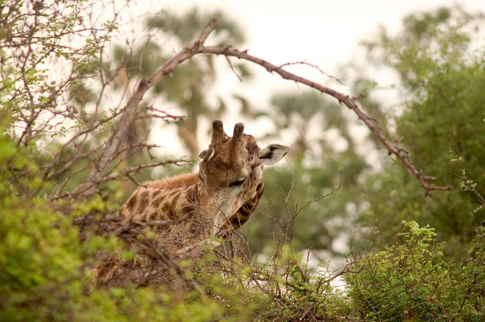 Africa animals-52.jpg