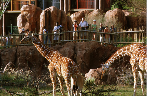 Disney Animal Kingdom Wildlife Park viewing area