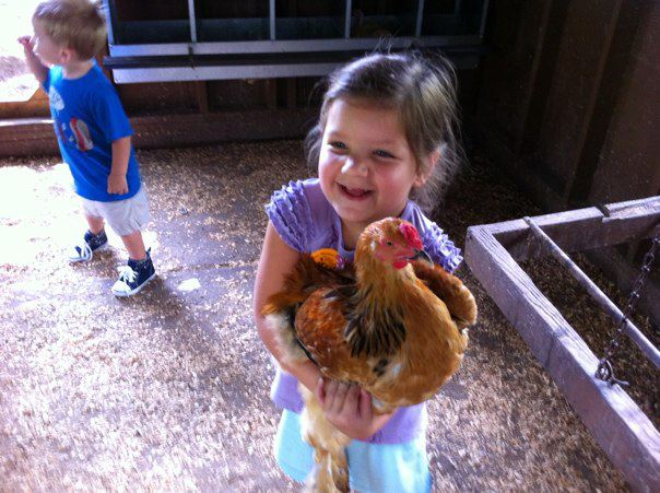 Chasing Chickens at Green Meadows Farm