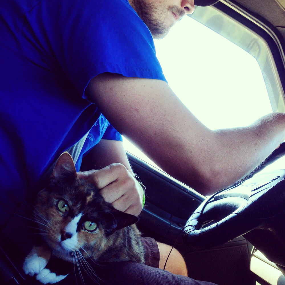 Loulou finally got settled right where she likes it…in the driver's seat.