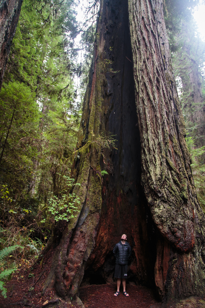 Standing inside a living, burnt-out redwood. Very cool.