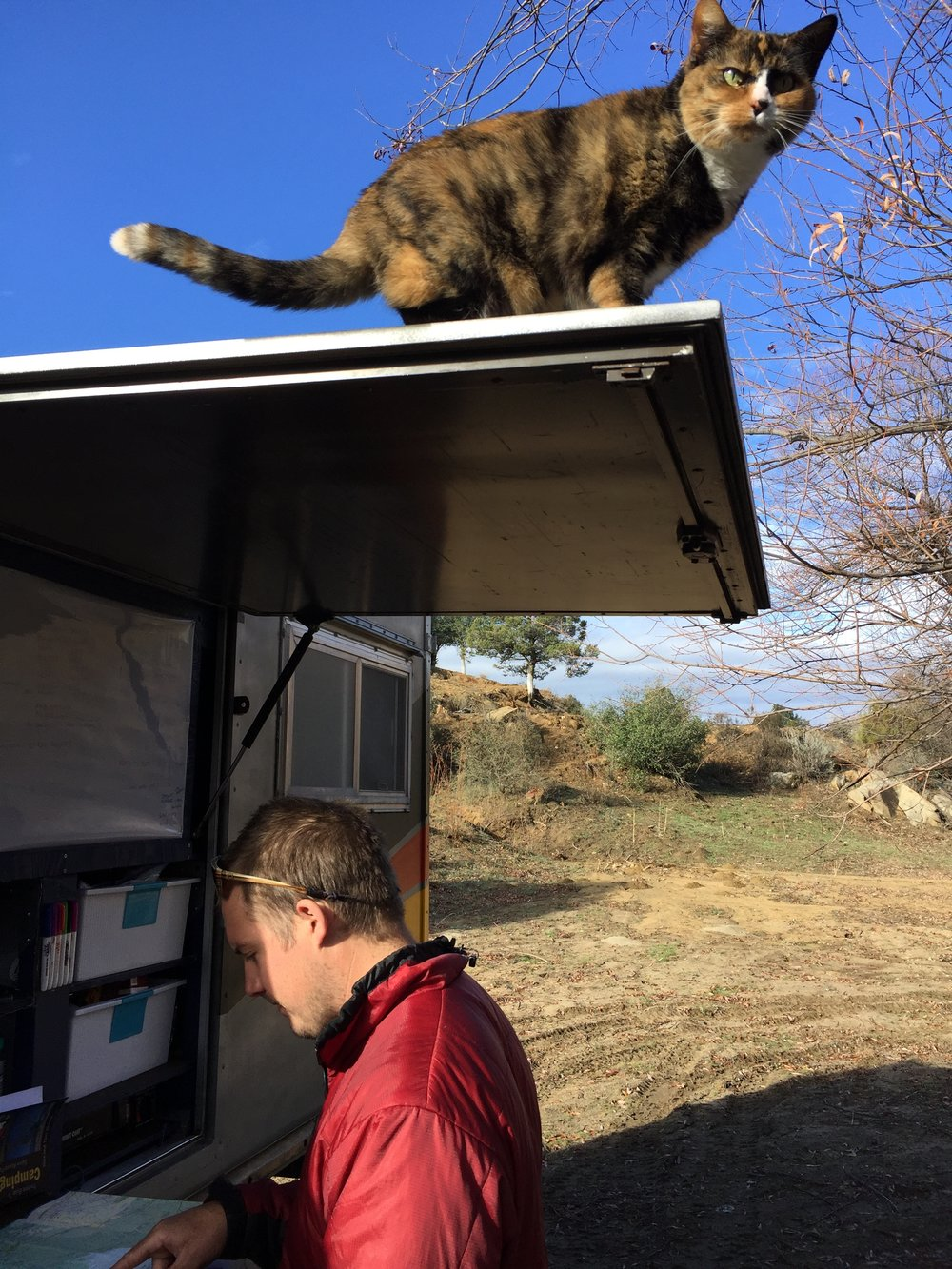 Loulou exploring new heights while we peruse the map for our next destination.
