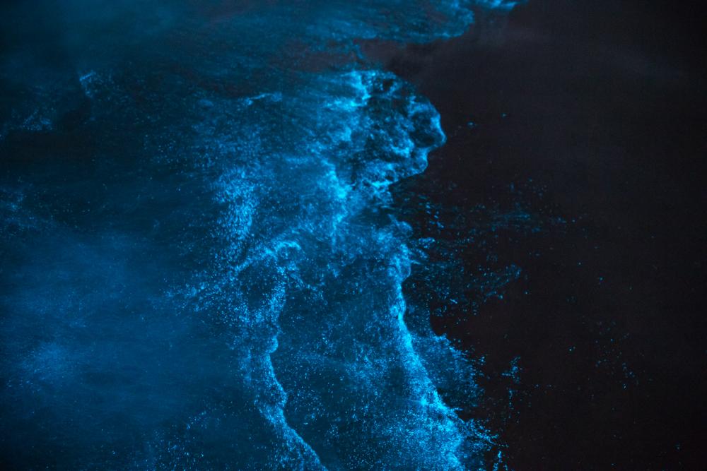 Spectacular bioluminsence.