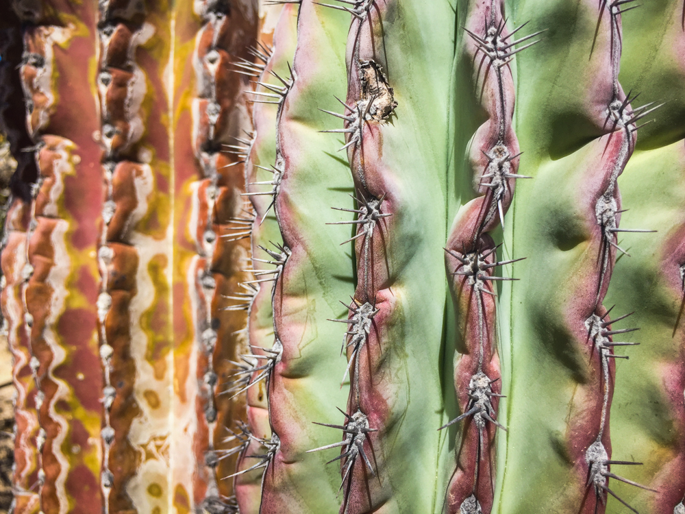 A close up of a cactus.