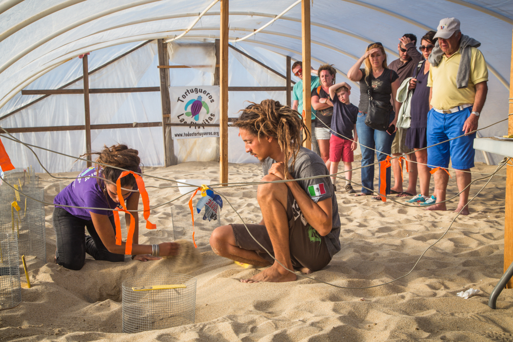 Volunteers removing eggs from the soft sand.