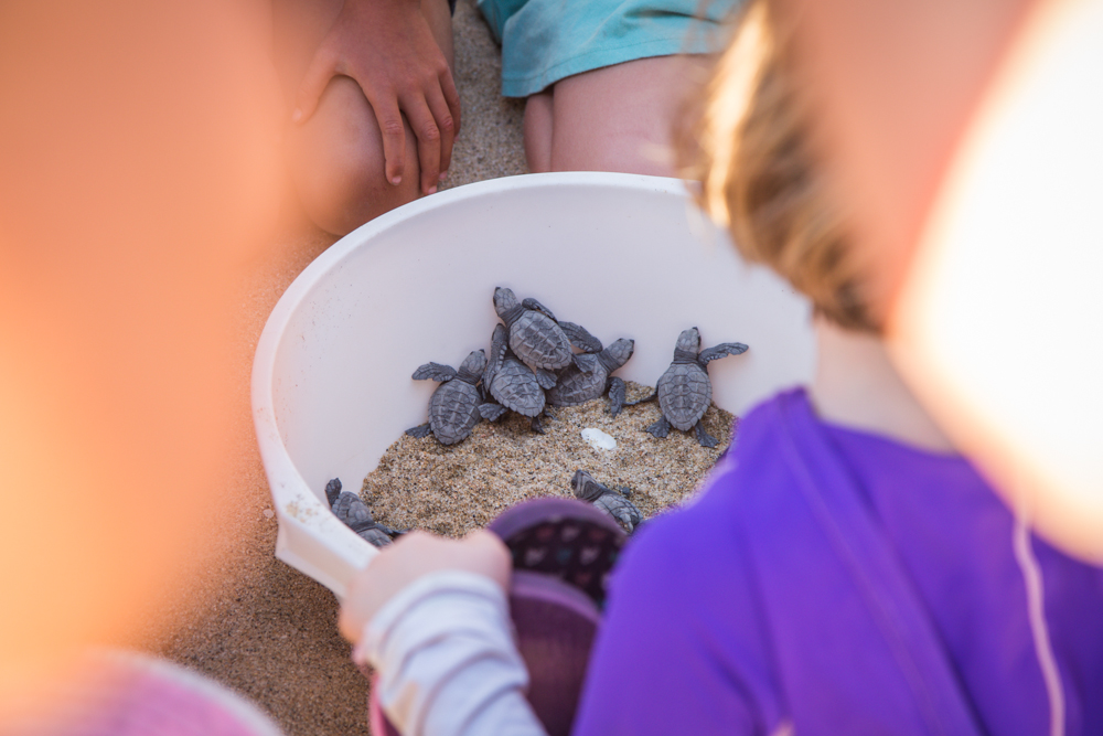 Sea turtles surrounded by an impenetrable wall of six year olds. The wall didn't move for over an hour.