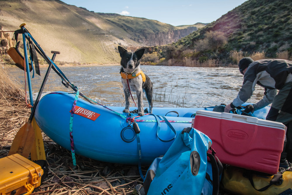 The third day, Gracie all loaded up and ready to hit the water as if she was born to be a rafting dog!
