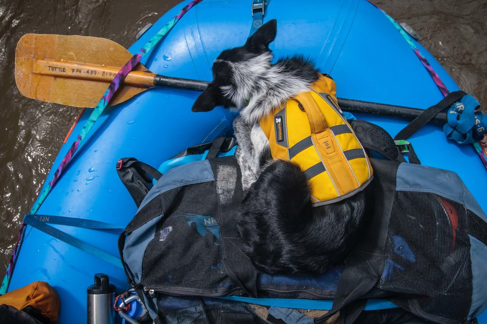 By the third day, Gracie was pooped. During the flatwater sections she'd ball up and fall fast asleep.