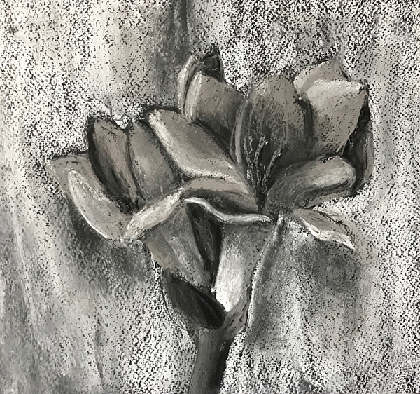 Maliha has used the greyscale value patterns in pastel to create a realistic flower drawing.