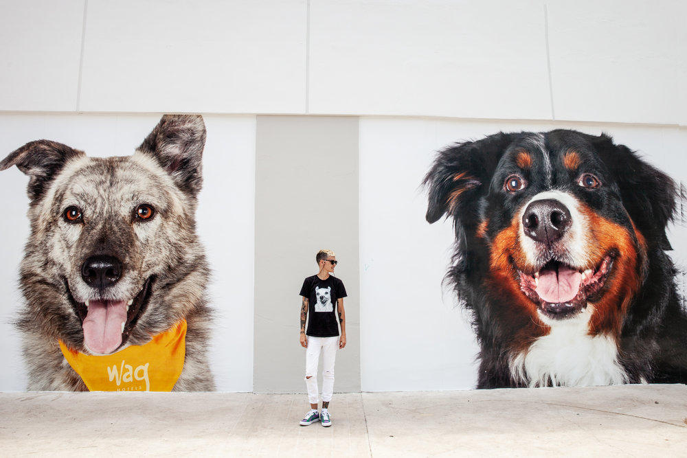 Pets-by-sorrell-los-angeles-wag-hotels-hollywood-2.jpg