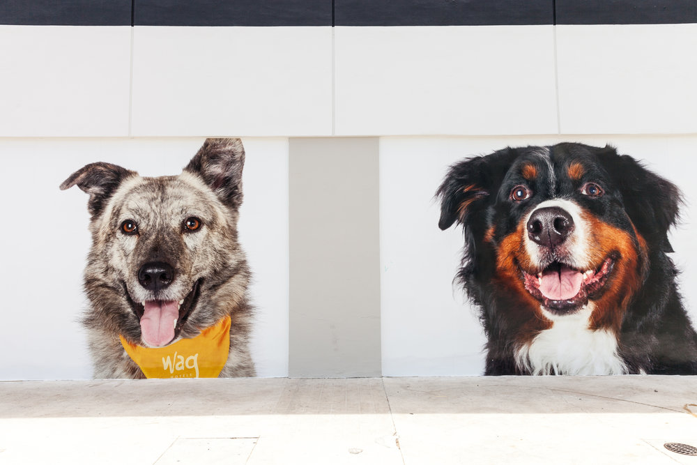 Pets-by-sorrell-los-angeles-wag-hotels-hollywood-4.jpg