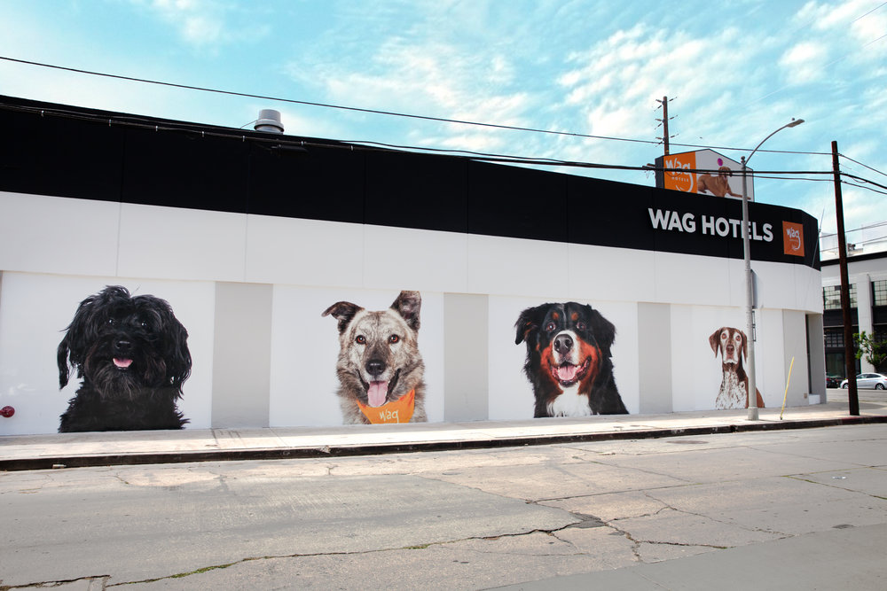 Pets-by-sorrell-los-angeles-wag-hotels-hollywood-1.jpg