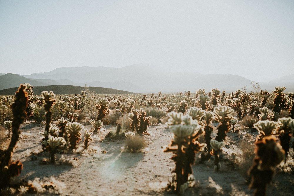 Kim-Heath-Photography-Bay-Area-Photographer-Joshua-Tree-Desert-Engagement-Dome-in-the-desert_0018.jpg