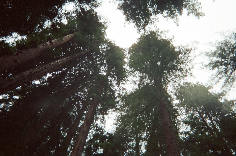 Redwoods. This was a dream come true