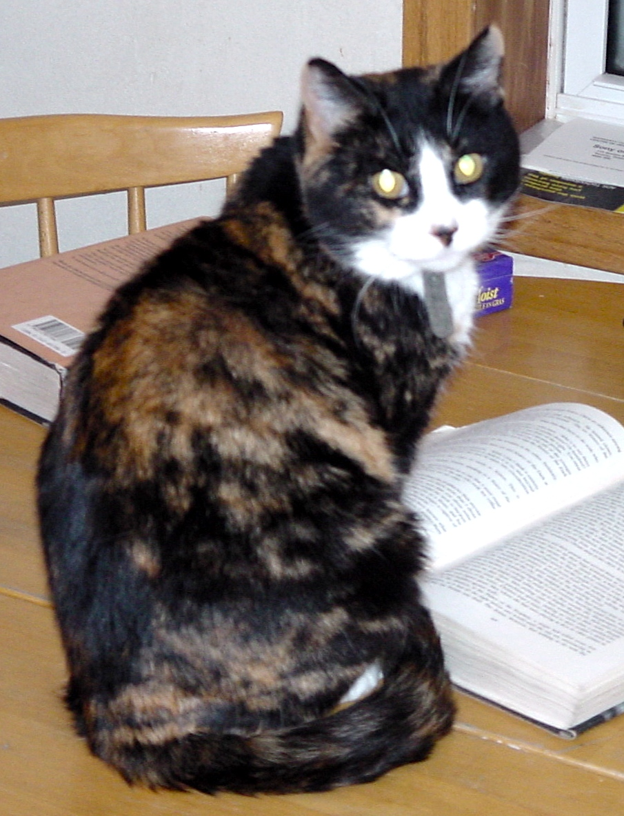 Unsworth the Cat - Unsworth is a particular lover of suspense and mystery. When she isn't curled up on a warm lap, she is avidly watching birds at the window, basking in the rays of the sun.