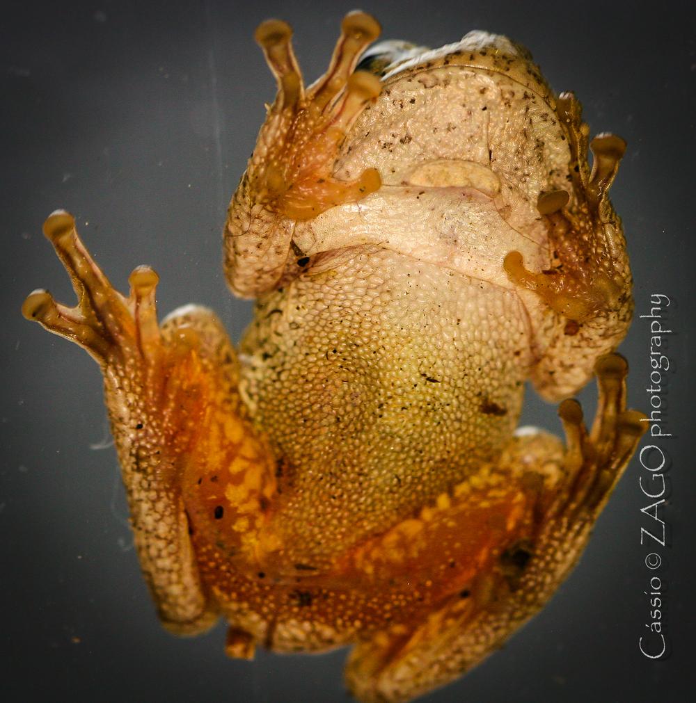 Frog-11.jpg