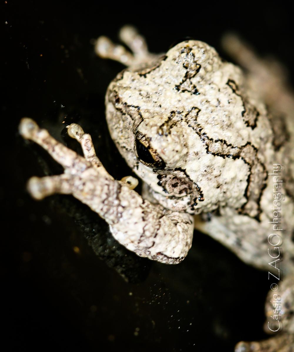 Frog-4.jpg