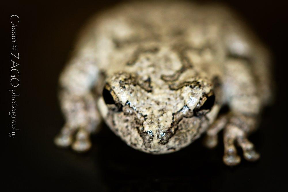 Frog-3.jpg
