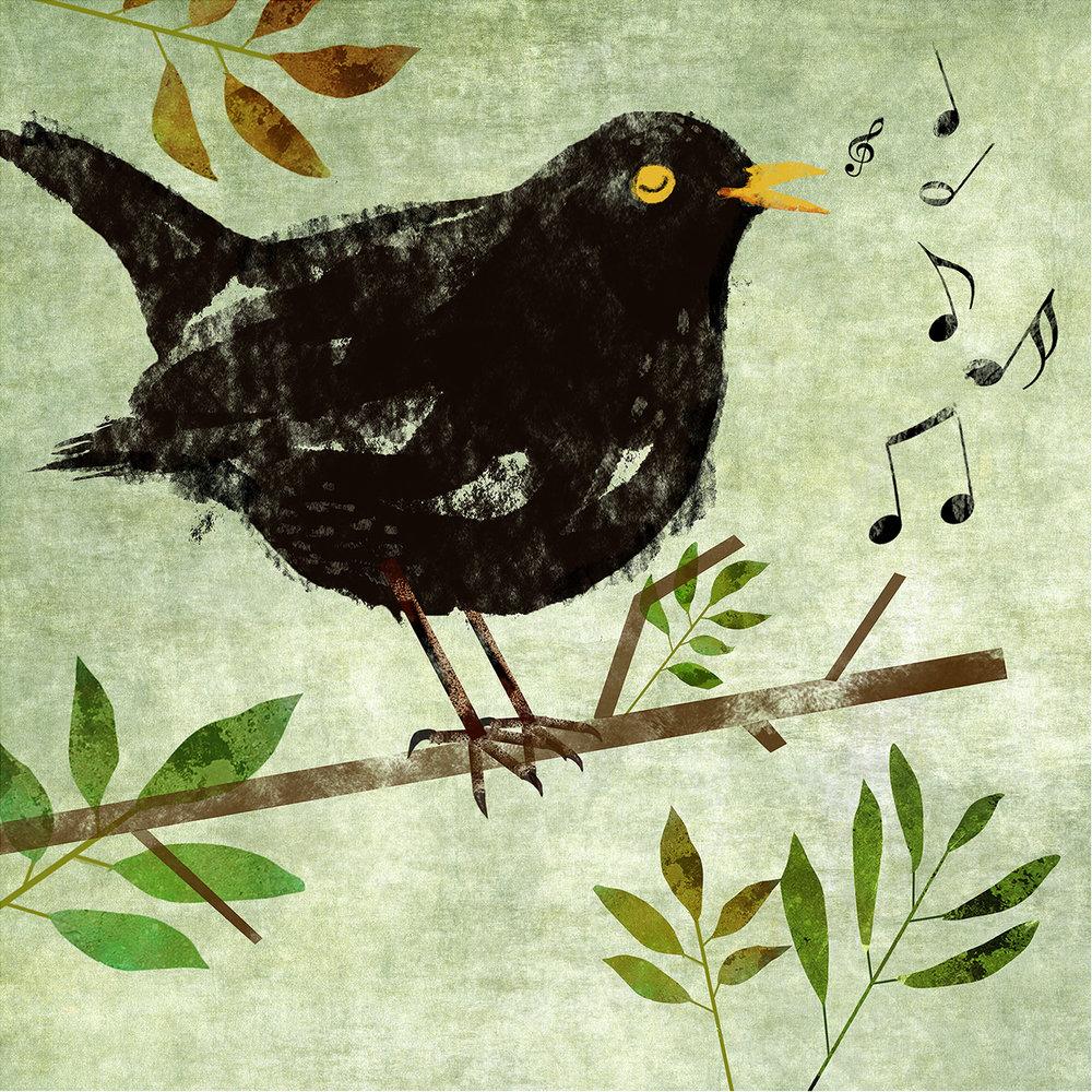 blackbird smal.jpg