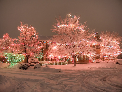 Pink trees!