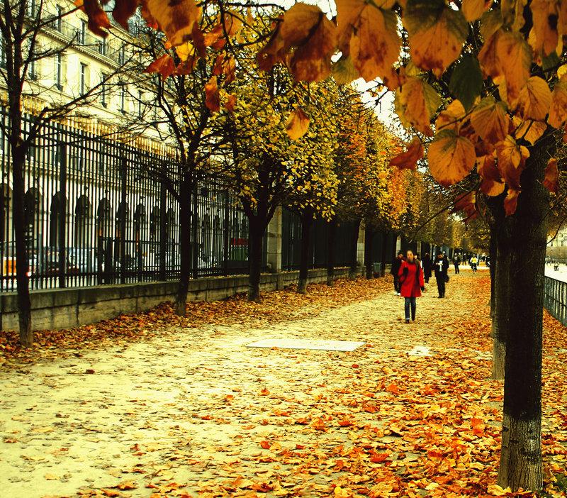 allthingseurope: Autumn Leaves in Paris via samsamforever