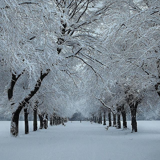 theworldwelivein: Winter in Manchester | Platt Fields Park, Manchester, UK, Europe ©Asim Shahzad