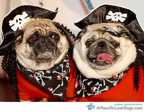 aplacetolovedogs: nydailynews Happy Halloween!