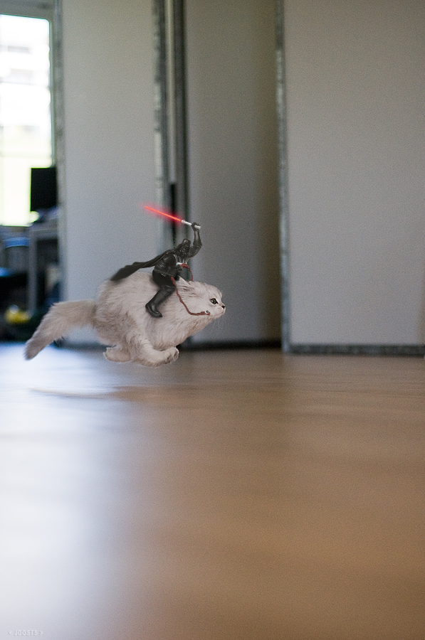 "maywhatever :      honkshu :      hammerito : lilykily : redjeep : aerissa : pophatic : shoppedscifi : ""Darth Vader Riding Cat"" by Joost5 ( original lol cat version here )"